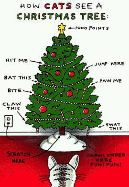 How cats see a Christmas tree lol humor / fun Pinterest