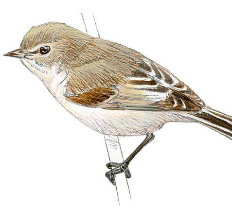 EFEMÉRIDES: Personaje de diciembre, por Luis Antonio Novella   Cantan, cantan.  ¿Dónde cantan los pájaros que cantan? Llueve y llueve. Aún las casas  están sin ramas verdes. Cantan, cantan  los pájaros. ¿En dónde cantan  los pájaros que cantan? No tengo pájaros en jaula.  No hay niños que los vendan. Cantan.  El valle está muy lejos. Nada... Nada. Yo no sé dónde cantan  los pájaros (y cantan, cantan)  los pájaros que cantan.