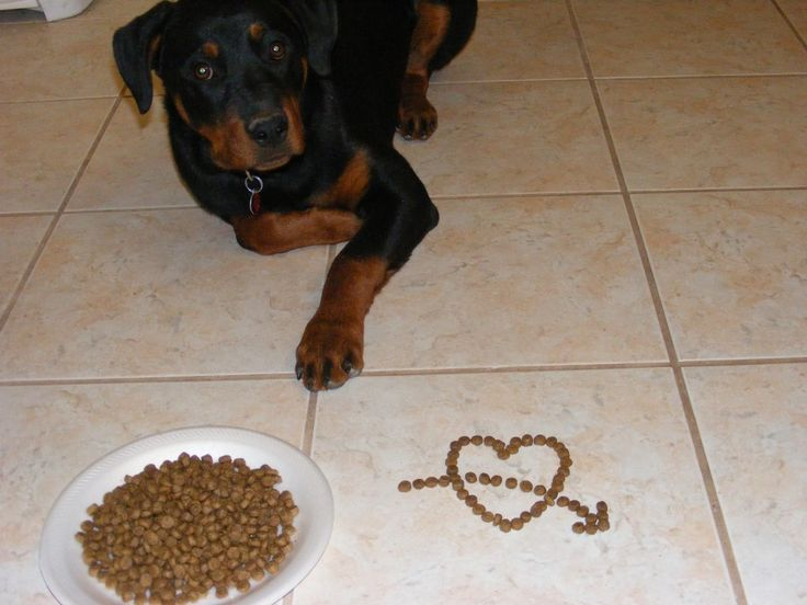 Vet-Approved Dog Upset Stomach Home Remedies