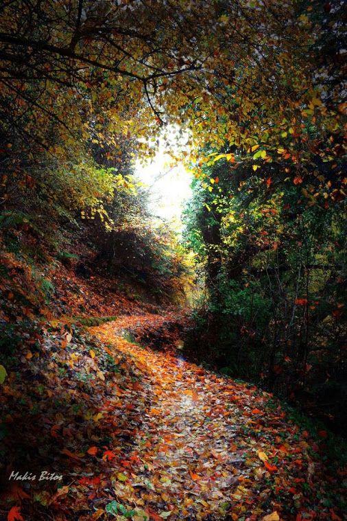 Carpet of leaves..@Makis Bitos on 500px...!!!