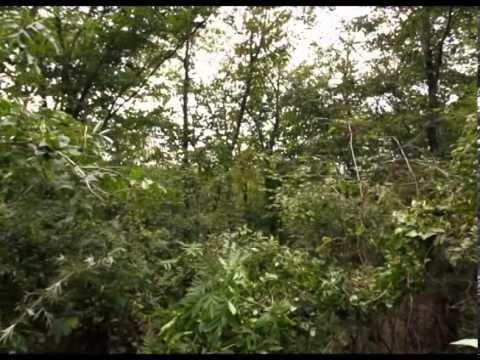 Enciclopedia Plantelor - Socul