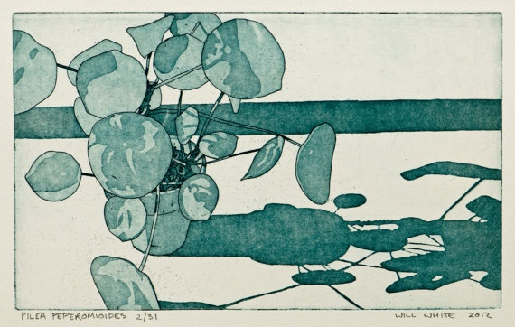 Pilea Peperomioides Pot Plant Etching Print by williamwhiteart, $65.00