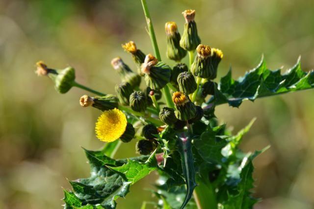 Evita utilizar productos químicos tóxicos en tu jardín. Utiliza estos herbicidas naturales para evitar malezas.
