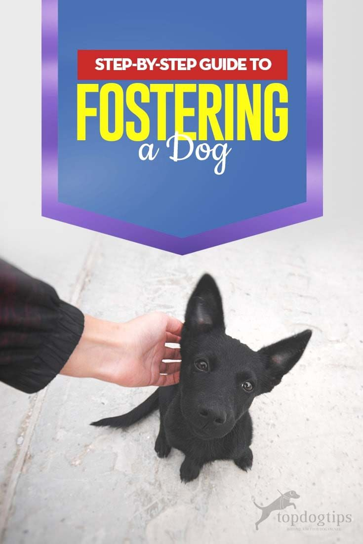 The Complete Guide To Fostering A Dog Dog Training Dog Parents Dogs