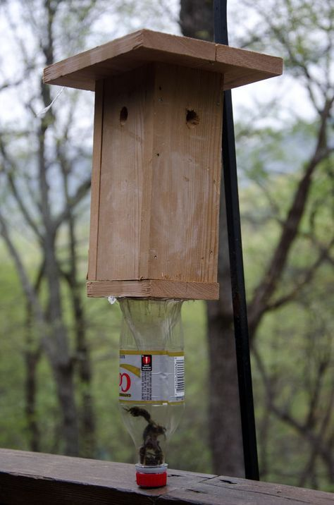 Best 25 Bee Traps Ideas On Pinterest