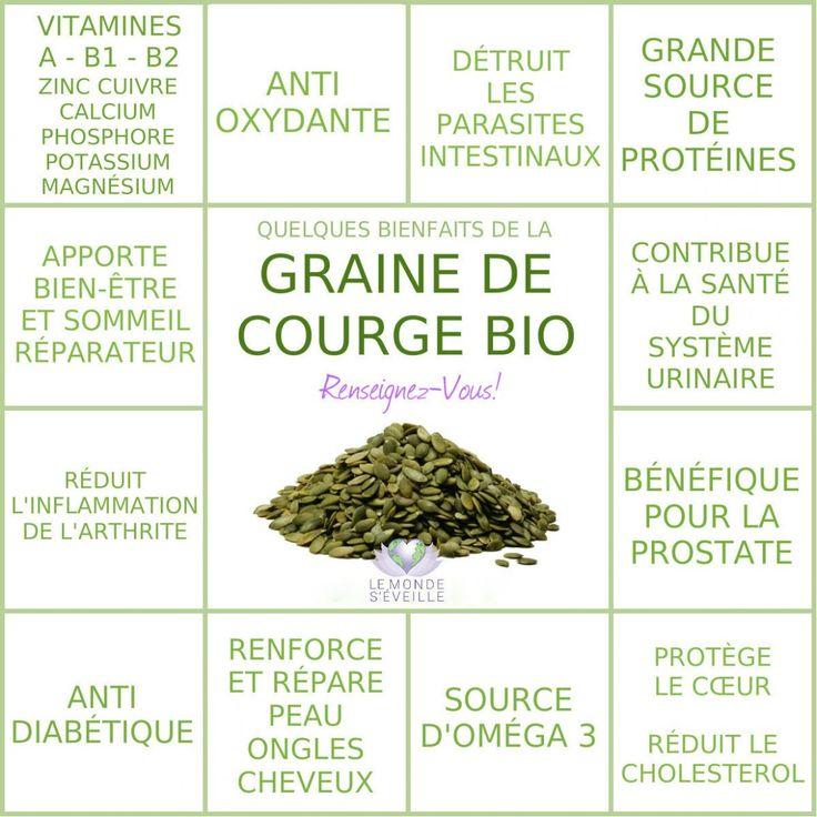 GRAINE DE COURGE | Le Monde s'éveille