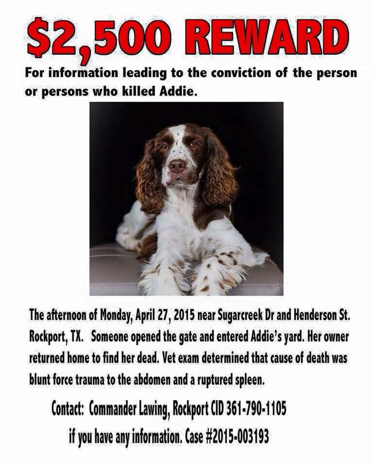 Rockport, Tx Please help us get justice for Addie! Adopted