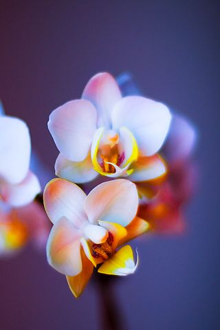 Flower Closeup - Android Wallpaper