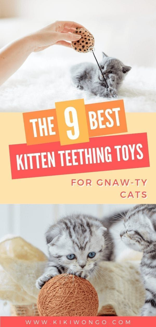 If Your Kitten Is Reaching The 3 Month Old Mark You Re Noticing Him Chewing More Than He Can Swallo In 2020 Kitten Teething Toys Kitten Accessories Kitten Toys