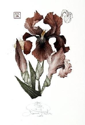 Iris I, by Marina Richterová  -- lithograph  -- 12,5 x 9 cm, 2006
