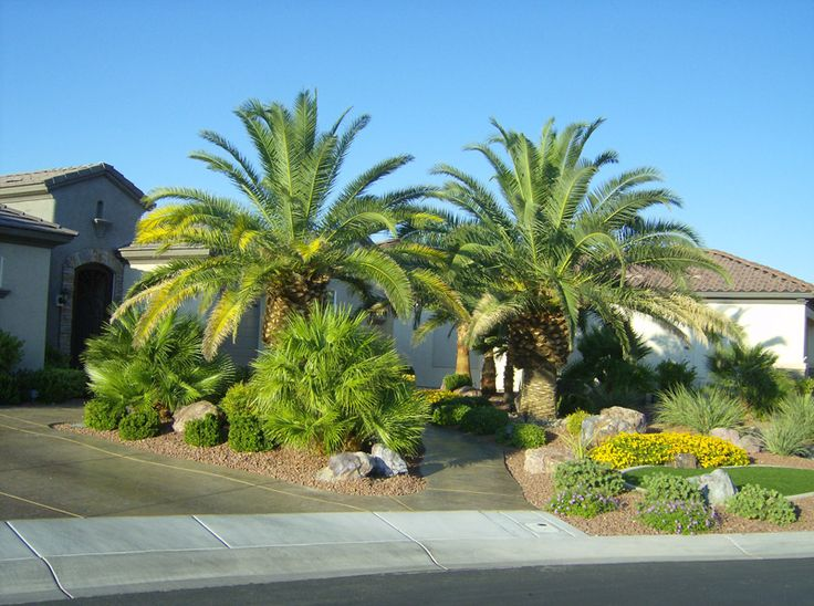 Beautiful front yard landscaping ideas with palm trees