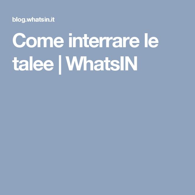 Come interrare le talee | WhatsIN