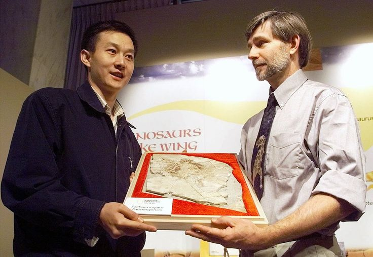 Falso eslabón perdido, versión 2. - El archaeoraptor era el fósil de un dinosaurio con plumas. Se dijo en el año 1999 que era el eslabón perdido entre las aves y los dinosaurios carnívoros, aunque resultó ser un engaño pues las partes del cuerpo eran de diferentes animales.