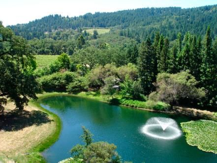 Visit the region's best wineries on a road trip through Northern California's wine country in Napa Valley and Sonoma.