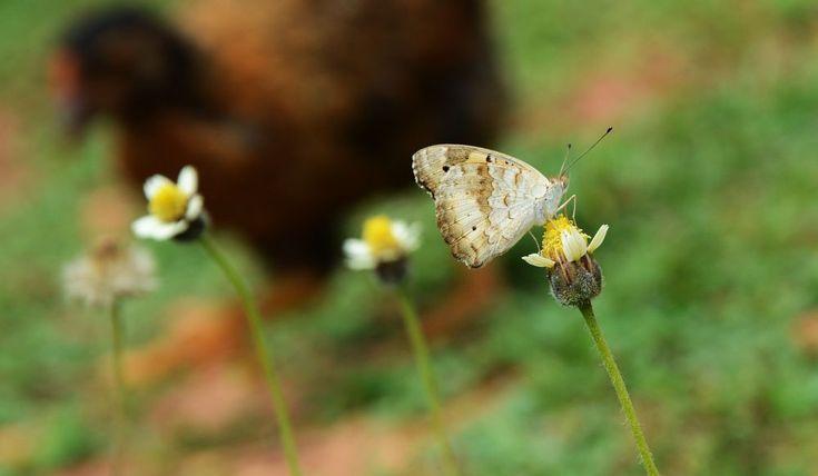 butterfly by prabhuviswa
