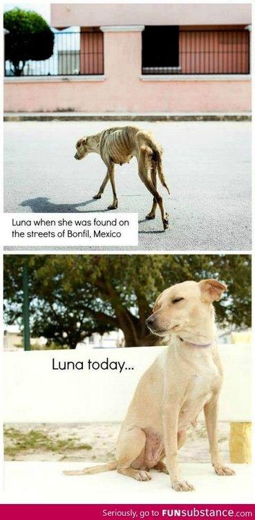 adopt a guide dog victoria