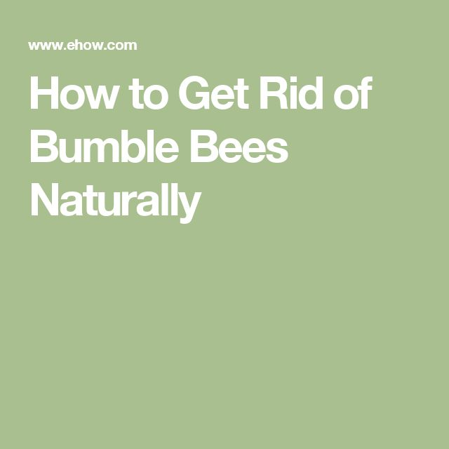 1000 Ideas About Getting Rid Of Bees On Pinterest Bee