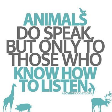 """Or as Piglet put it, """"Lots of people talk to animals. Not that many listen though. That's the problem."""""""