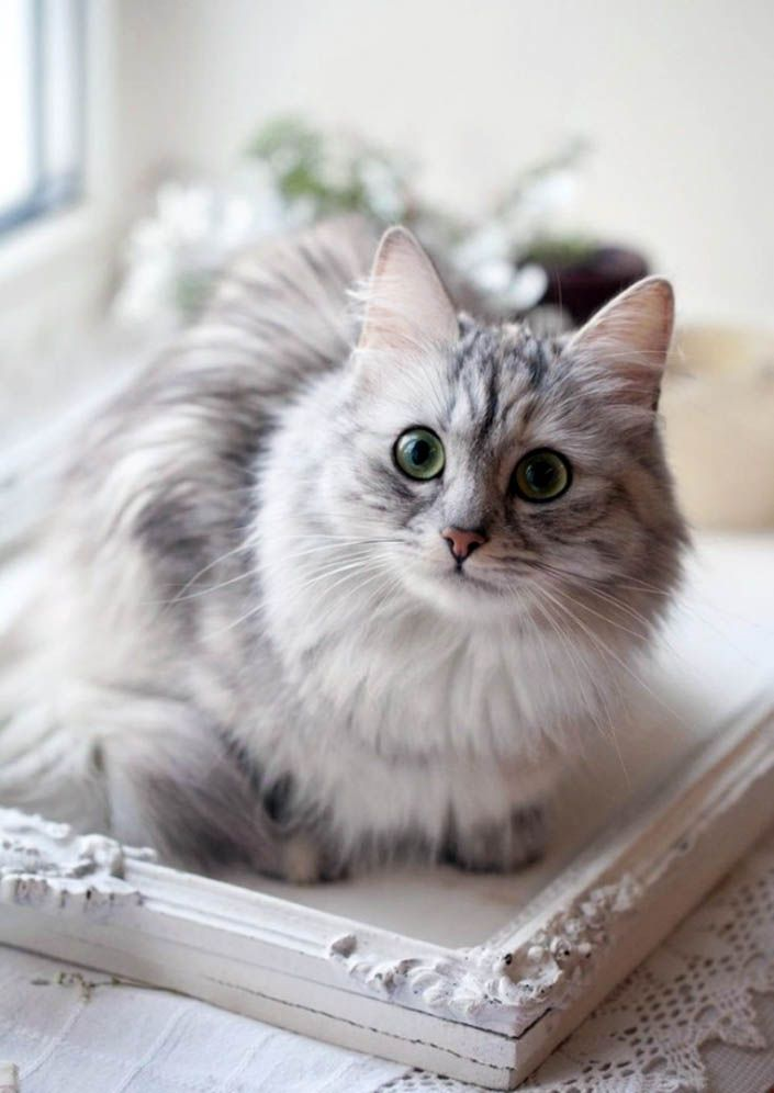 10 Reasons People Should Love Cats         9# You don't have to take them outside to do their business.
