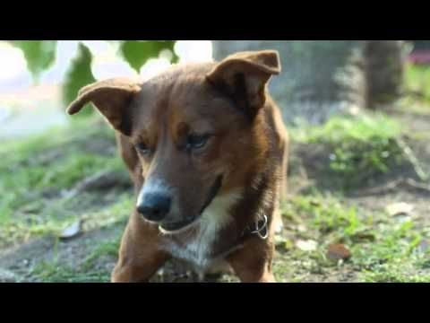 Dog Donor Best Commerical