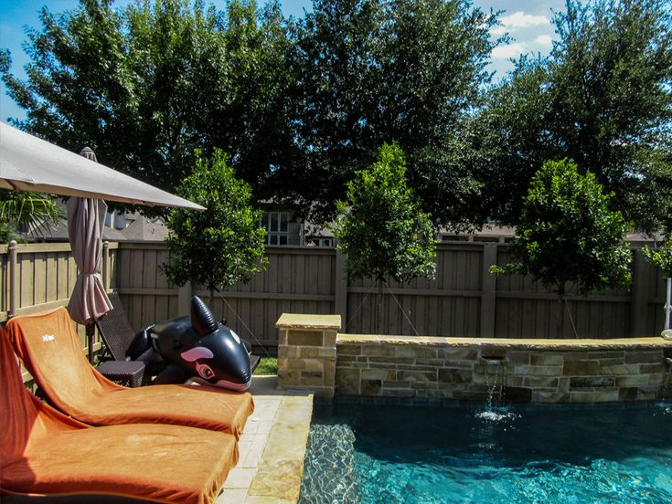 Eagleston Holly Dallas Texas Treeland Nursery Landscape Design Privacy Plants Pool Landscaping