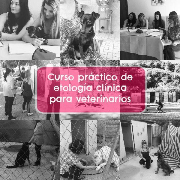 Consulta gratuita para perros con problemas de comportamiento en Málaga