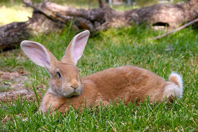 F Giant Rabbit 24 best Bunny Houses i...