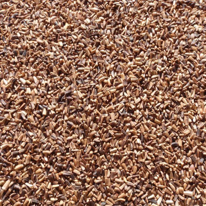 Chicory Seed
