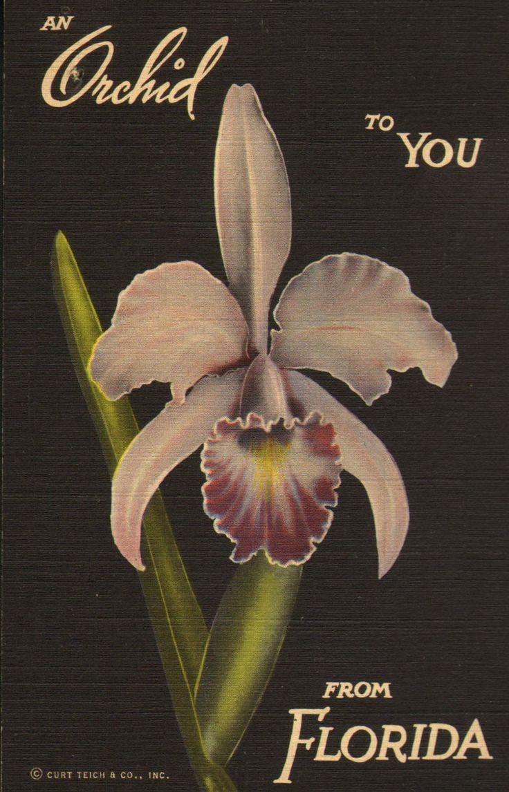 34 best fl native orchids images on pinterest gardening florida
