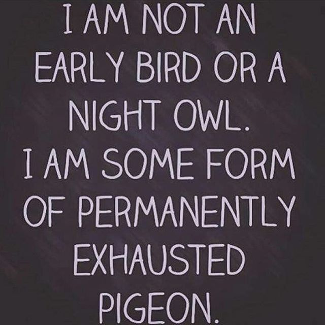 I'm the permanently exhausted pigeon!
