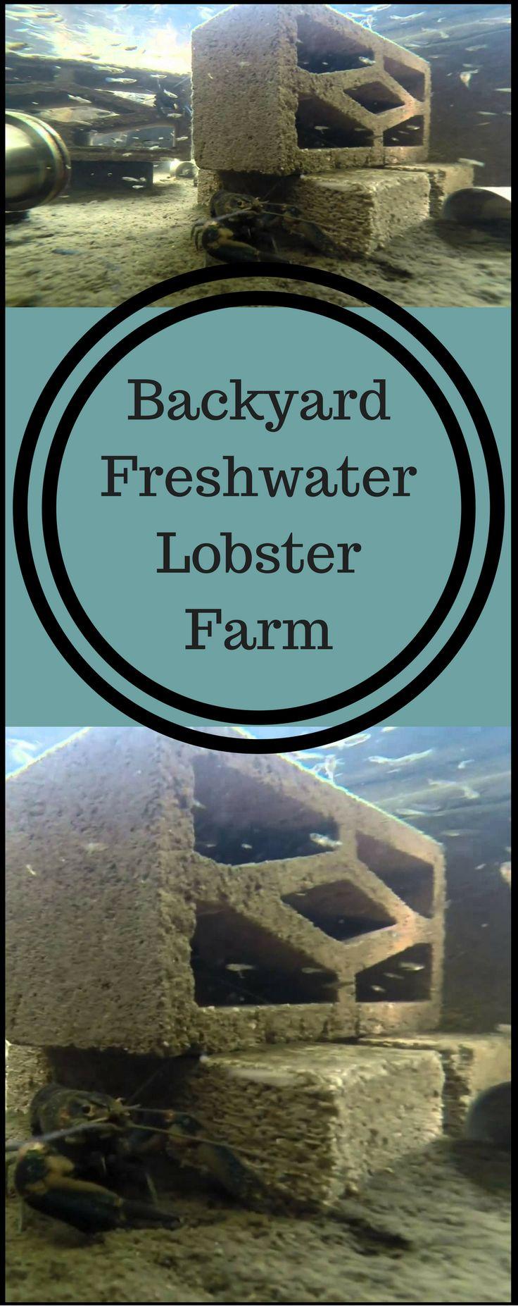 13 best images about aquaculture on pinterest aquaponics system