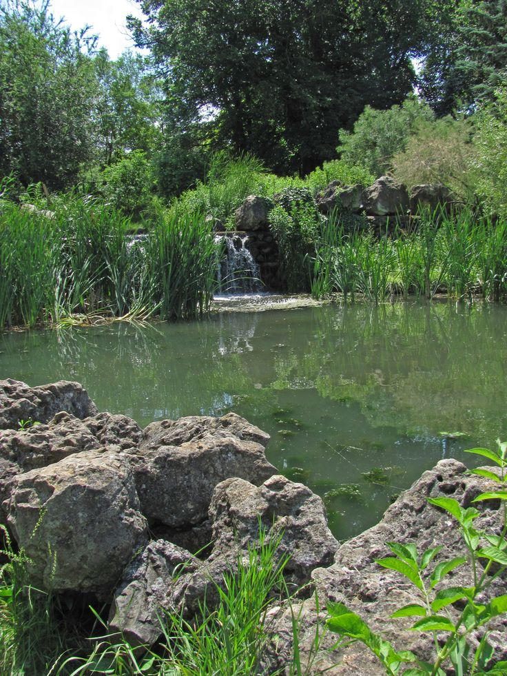 Салгир-река. Часть 2, или Там лилии цветут - блоги - Смородина