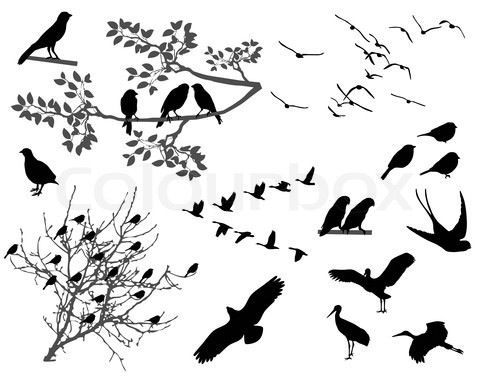 Bird Silhouette Tattoo | Tattoo | Pinterest | Bird Silhouette Tattoos ...