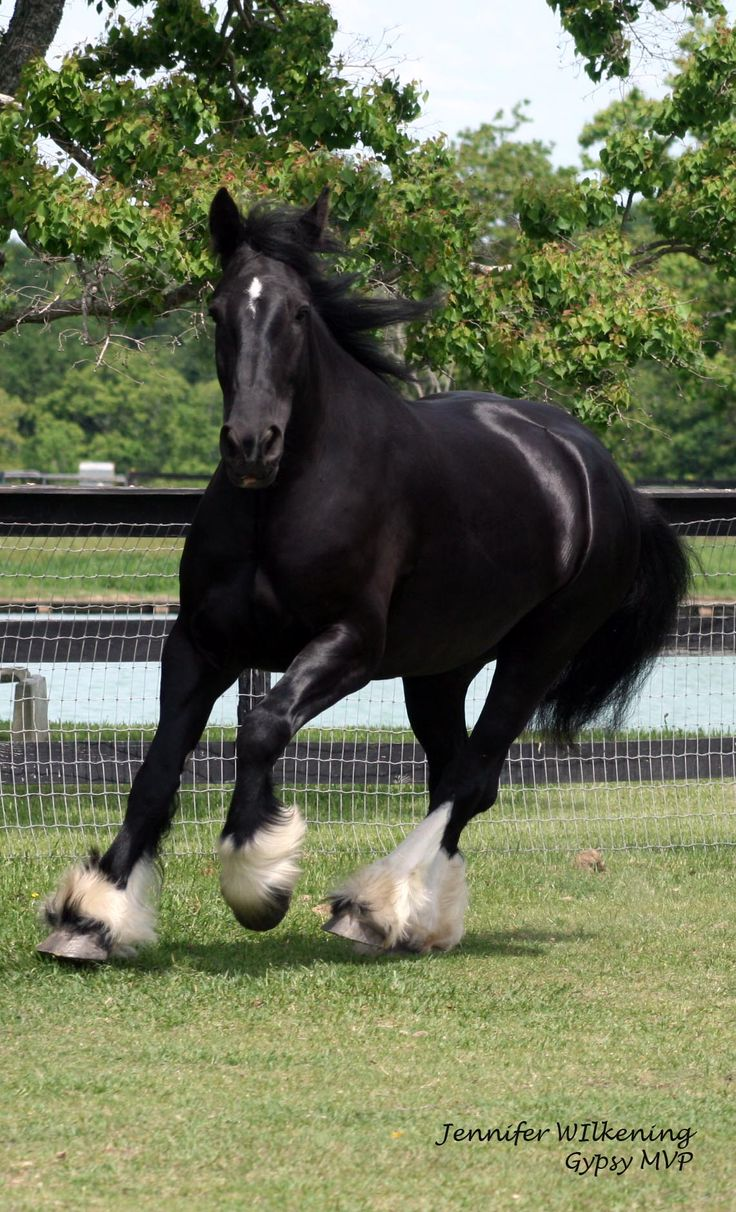 17 Best ideas about Pictures Of Horses on Pinterest ...