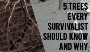 6 Trees Every Survivalist Should Know & Why. In the Desert SW I'd add Mesquite and Palo Verde to the list since we don't have Birch or Basswood.