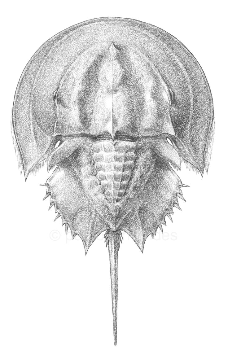 Natural History | Pedro Fernandes