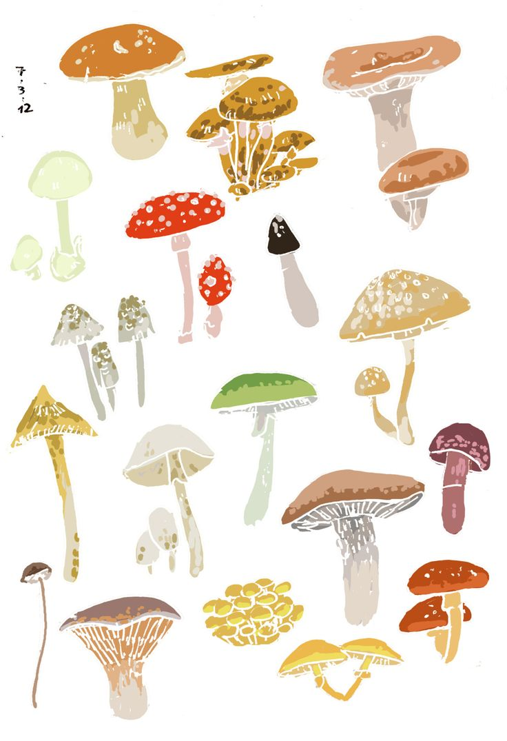 I've always had a thing for mushrooms