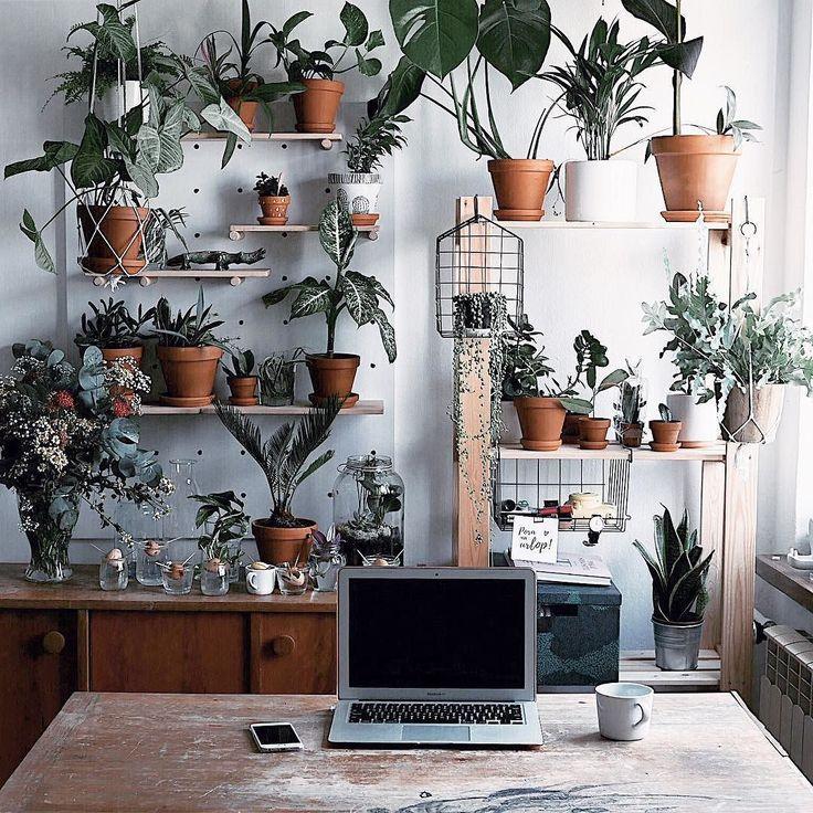 [news!] Już jest - nowa lipcowa tapeta na komputer w klimacie palm piasku i morza (link wiadomo - w BIO). PS. Jeśli jesteście ciekawe jak wyglada sama tapeta wpadajcie na insta story - czeka tam na was relacje na żywo ze scrollowania posta ) ______________ #botanicallife #botanical #plantnursery #plantpower #plantlove #plantstagram #plantlife #plantstagram #houseplantclub #urbanjungle #urbanjunglebloggers #workhardanywhere #workspace #deskview #tv_living #tv_lifestyle #tv_living_nm2…