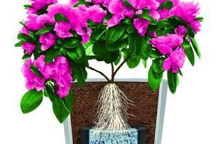 Sposób na zieleń: Hydrobox. Innowacja w nawadnianiu roślin