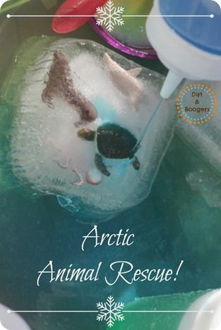 Arctic Animal Rescue!  A fun science activity that's great for problem solving skills.
