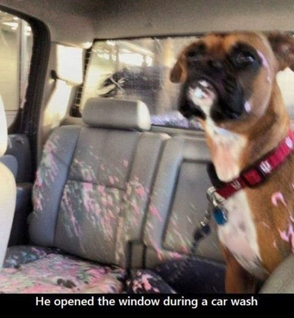 funny pictures of dogs. This my friends is exactly why dog owners need locking windows lol poor puppy