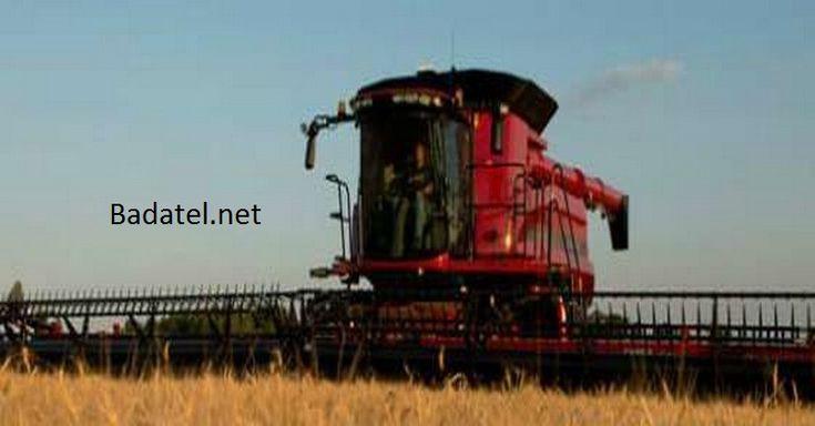 Pravda o pšenici