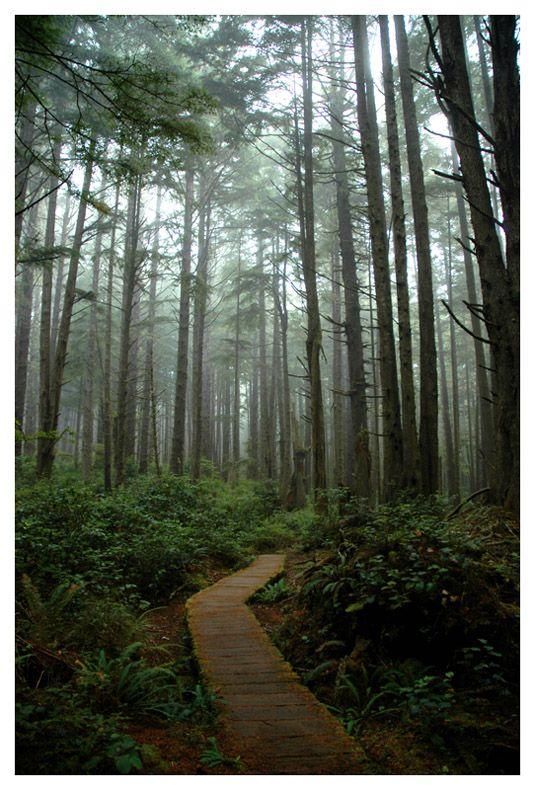 Rain Forest Trail - Olympic National Park, Washington Copyright: Brian Schwartz