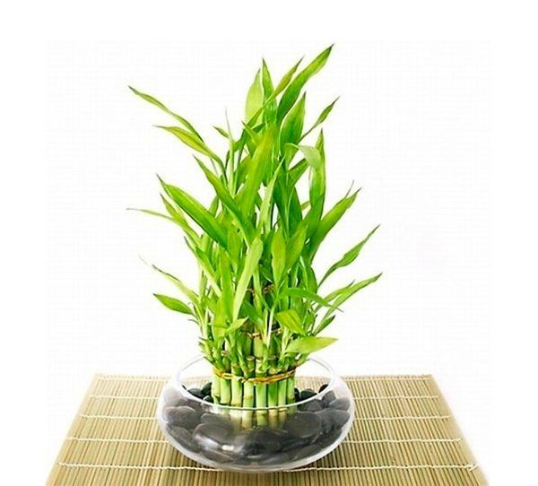 Ordinary House Plants For Sale Part - 14: Even Those Without A Green Thumb Can Appreciate The Beauty Of Houseplants U2013  If Youu0027