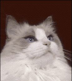Is it weird that I'm jealous of this cat's eyes? It looks like it's wearing makeup.... hahaha