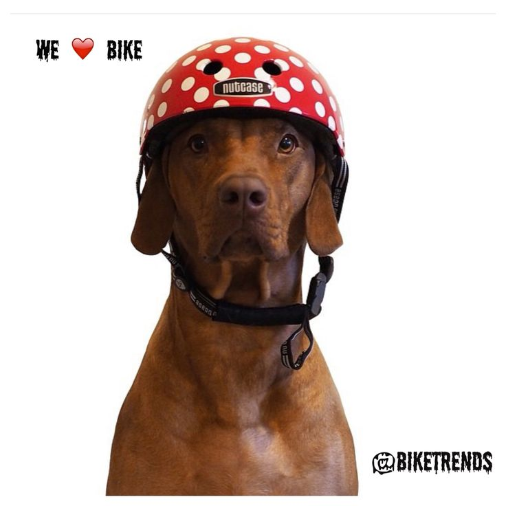 Bom final de semana #bikelovers!