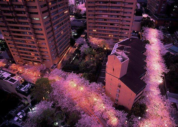 六本木・アークヒルズでは毎年恒例の「さくらまつり 2017」が2017年3月31日(金)から4月2日(日)まで開催される。桜色に染まるアークヒルズで楽しむお花見のほか、特別に一般公開される「ルーフガー...