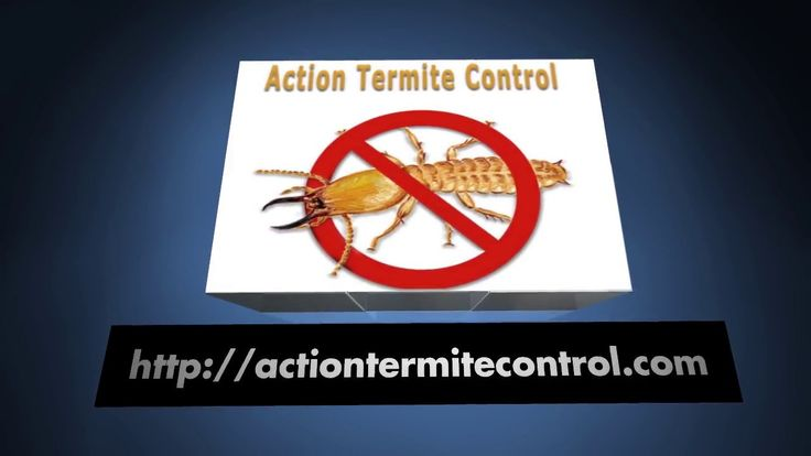 Action Termite Control in Arizona  #Action #Termite #Control #Arizona