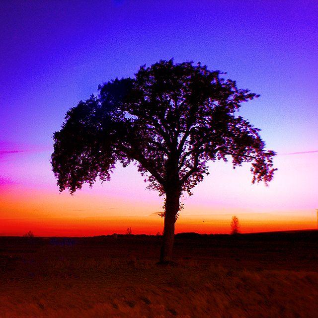 A tree at sunset in Burgos (Revillaruz). Un arbol al atardecer  en Revillaruz Burgos,