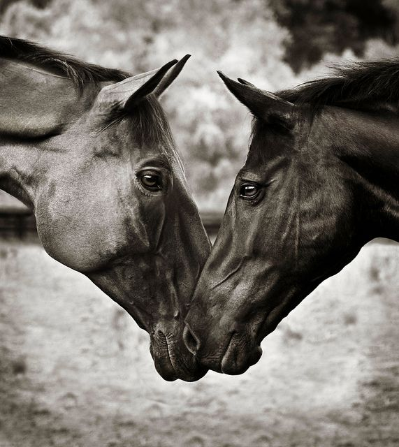 ♥ #horse #horsefans #horselovers #animals
